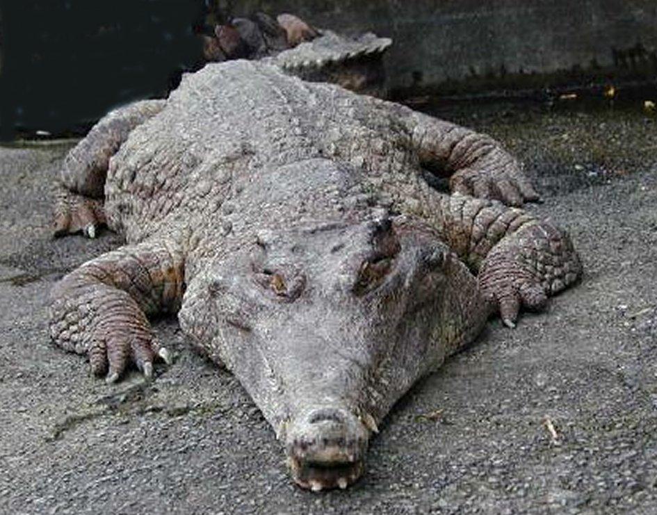 http://bicharada.net/animais/fotos/1334.jpg