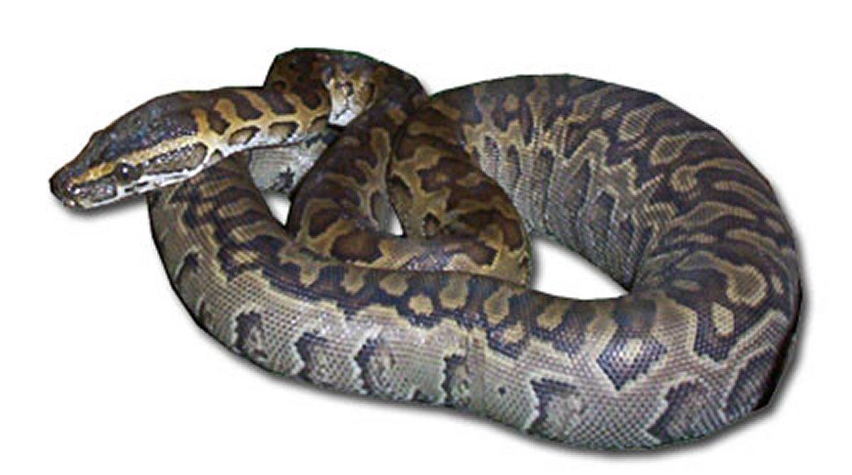 Bioterio de Animales Ponzoñosos (Serpentario) - Fac. Ciencias - Fac ...
