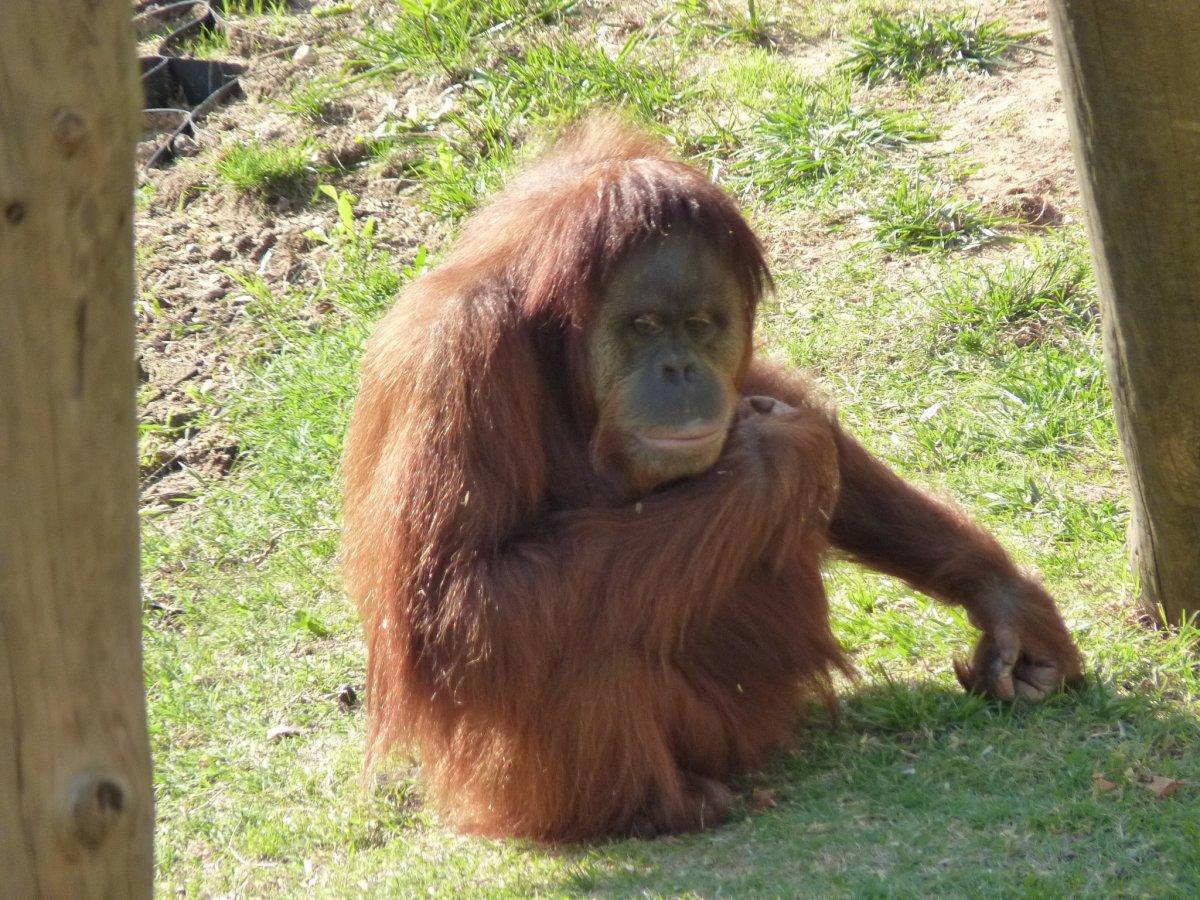 Animais > Primatas ...